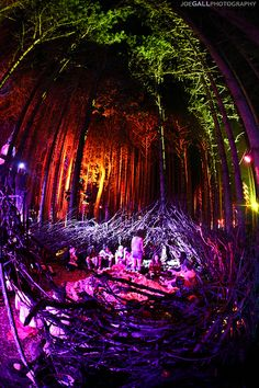 My favorite place at Electric Forest <3