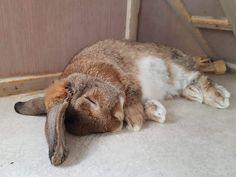 #Goodnight #TuesdaySnoozeday Animals And Pets, Baby Animals, Amor Animal, Cute Baby Bunnies, Super Cute Animals, Honey Bunny, Bunny Art, Pet Rabbit, Guinea Pigs