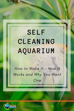 Self Cleaning Aquarium. How to make a self-sustaining aquarium biosphere, How They Work and Why You May Want a Self-Cleaning Low Maintenance Aquarium. via @fishtankworld0195