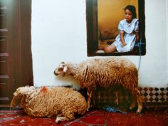Buying sheep during Ait Kebir festivities. Color Photography, Amazing Photography, Portrait Photography, Travel Photography, Casablanca, Renaissance Artworks, Really Cool Photos, Viviane Sassen, Ecole Art