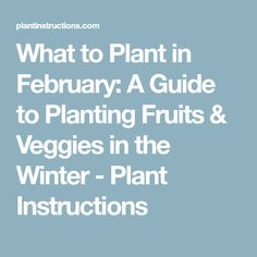 What to Plant in February: A Guide to Planting Fruits & Veggies in the Winter - Plant Instructions