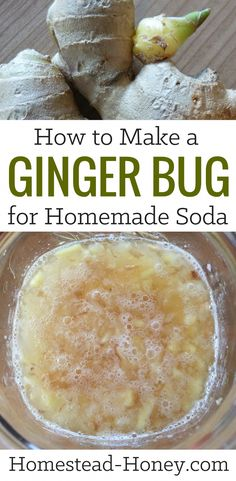 ginger bug is a natural ferment that can be used as a starter culture for homemade sodas, ginger ale, or root beer. Using just three ingredients - organic ginger, sugar, and water - I'll teach you how to make a ginger bug at home. Kombucha, Healthy Drinks, Healthy Recipes, Whole Food Recipes, Cooking Recipes, Fermentation Recipes, Soda Recipe, Fermented Foods, Fermented Fruit Recipe