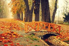 by nox-moonLover on DeviantArt Isaac Newton, Once In A Lifetime, Garden Bridge, Belgium, Around The Worlds, Italy, Wallpaper, Rive Gauche, Travel