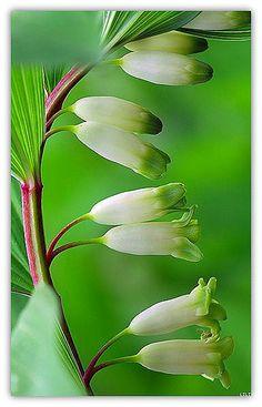 "美丽的世界,那些奇花异草...""Beautiful world, flowers and herbs ..."""