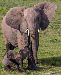 elephants~ how sweet is this...let's go swimming mom ♪