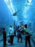 Melbourne aquarium tunnel