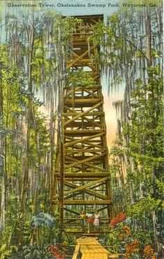 Swamp observation tower