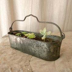 I have a copper planter I can do this with.  Hope that girl who sells succulents is at Warrenton in April.