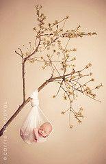 Newborn on branch