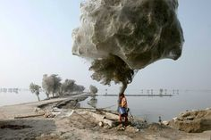 El Árbol de la Araña 01. Cuando el hábitat de las arañas (el suelo) se ve perjudicado por las inundaciones, estas arañas de Medio Oriente tienden a crear estos árboles en Pakistán.
