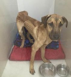 Women facing charges for allegedly starving dog-47-year-old Mary Paro and 22-year-old Ali Hemingway owned the skeletal dog who was brought to DeWitt Animal Hospital by an animal control officer earlier this week.