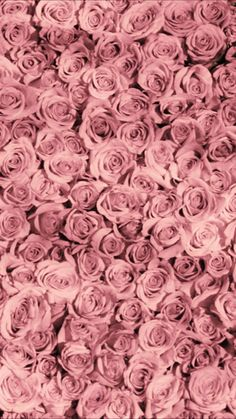 Image about rose in flowers🌷 by pink wallpaper design, flower wallpaper, designer Wallpaper Iphone Pastell, Pink Wallpaper Design, Flower Phone Wallpaper, Trendy Wallpaper, Flower Wallpaper, Wallpaper Uk, Wallpaper Quotes, Pink Iphone, Background Vintage