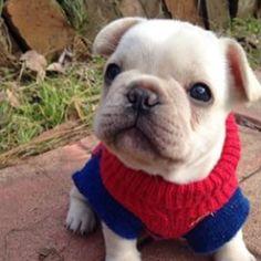 Frenchie!