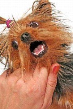 Aggressive Biting Puppy