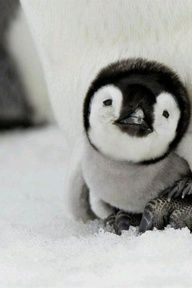 Look, I dont ask for much.  Just give me cute baby animals on a regular basis, and Ill probably die of happiness.