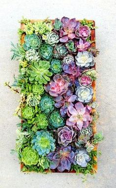 succulents by christi