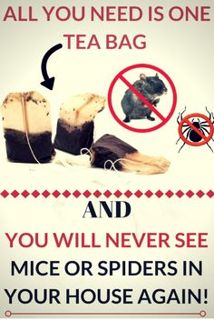 #tea bag #mice #spider #clean house