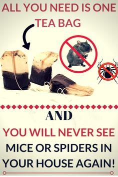 #tea bag #mice #spider #clean house