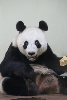 Delirious Panda. Lol he's awesome!