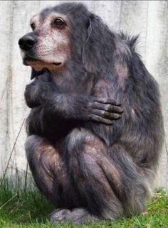 Real Human Animal Hybrid | Hybrid-animals-Hybrid-ani-010.jpg