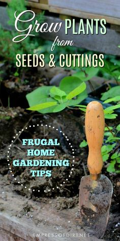 How to grow plants from seeds and cuttings to propagate indoor and outdoor garden plants. #gardening #propagation #seedstarting #frugalgardening #gardentips #growyourowngarden #empressofdirt