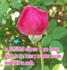 La felicidad es hacer lo que deseas, desear lo que haces y no soñar tu vida, sino VIVIR tu sueño