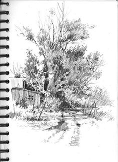 After the Rain Tree Drawings Pencil, Landscape Pencil Drawings, Landscape Sketch, Ink Pen Drawings, Watercolor Landscape, Landscape Art, Landscape Paintings, Tree Sketches, Ink In Water