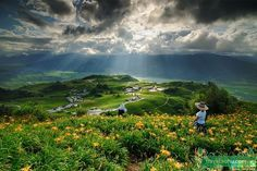 Truth on Falun Gong | The gorgeous sea of daylily flowers