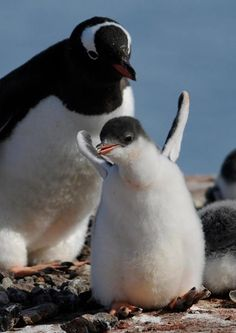 企鵝  Penguin