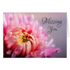Missing You Pink Chrysanthemum Macro Photo Card - love cards couple card ideas diy cyo
