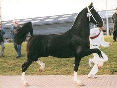 Photo of Nando-Gelderlander