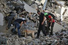 Search: A sniffer dog is used to seek out any survivors under a collapsed…