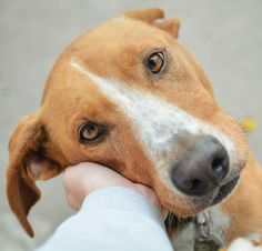 My World, Dogs, Animals, Animales, Animaux, Doggies, Animal, Pet Dogs, Animais