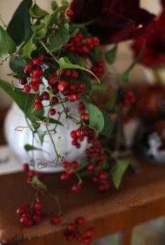 italian berry