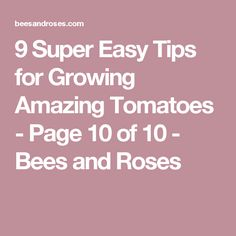 9 Super Easy Tips for Growing Amazing Tomatoes - Page 10 of 10 - Bees and Roses