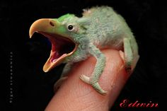 (2011-07) Eagle + chameleon = eagleon?