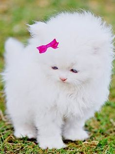 *pulls Gus into the pet store and over to the cats* Look at it, Gus.. Isn't it adorable?!