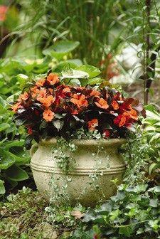 Fall Container Recipes Garden Design Calimesa, CA Garden Spaces, Garden Pots, Terrace Garden, Garden Ideas, Fall Containers, Fall Planters, Heuchera, Plant Nursery, Plant Decor
