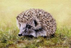 Hedgehog Pastel Painting by Colin Bradley using Pastel Pencils. Learn to draw Animal Pictures with Colin's lessons: https://www.colinbradleyart.com/home/draw-these-animals-using-pastel-pencils/ #PastelPencils #PastelArt #ColinBradleyArt #hedgehog