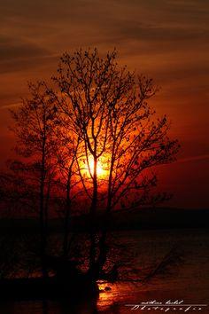 The burning tree -