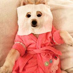 Me this long weekend. Long Weekend, Korean Beauty, Animal Kingdom, Teddy Bear, Skin Care, Dogs, Instagram Posts, Animals, Animales
