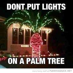 Lights On A Palm Tree