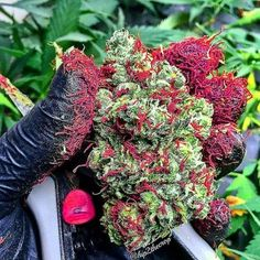 thedailychief:  Look at this crazy nugg!...