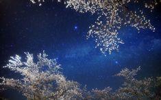 W.C.Williams tradotto da C.Campo - In questa notte... In questa notte, la più languida dell'anno, la luna è nella fase gialla senza luce. L'aria è morbida, il gufo non ha che una nota, il ciliegio fiorito è una nebbia sui boschi, il...https://ilsassonellostagno.wordpress.com/2015/02/26/william-carlos-williams-in-questa-notte-traduzione-di-cristina-campo/