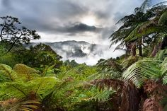 Magnificent New Zealand bush at Waimangu Volcanic Valley, Rotorua Auckland, Great Places, Places To See, Places Around The World, Around The Worlds, Excursion, New Zealand Travel, Beautiful Landscapes, Beautiful World
