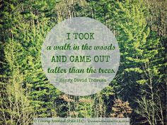 I took a walk in the woods and came out taller than the trees. – Henry David Thoreau ~ Living Nomad Style ~ LIVINGNOMADSTYLE.COM