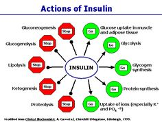 Insulin and Glucagon: A fantastic wealth of information to help understand your body's metabolic processes