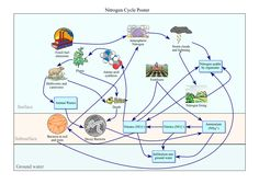 Life Science Graphic Organizer: Nitrogen Cycle Poster High School Science, Life Science, Nitrogen Cycle, Earth And Space Science, Teaching Strategies, Graphic Organizers, Data Visualization, Ecology, More Fun