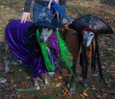 our two greyhounds, at their annual costume party today, with Greyhound Options, Inc. Delilah as the glam witch and Benny as Capt. Benny Sparrow. hee hee. they were good sports.