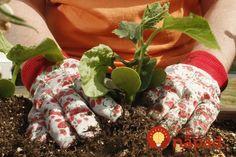 Pýtate sa, ako ochrániť záhradu pred škodcami? Nemusíte urobiť nič, tieto rastliny to urobia za vás!